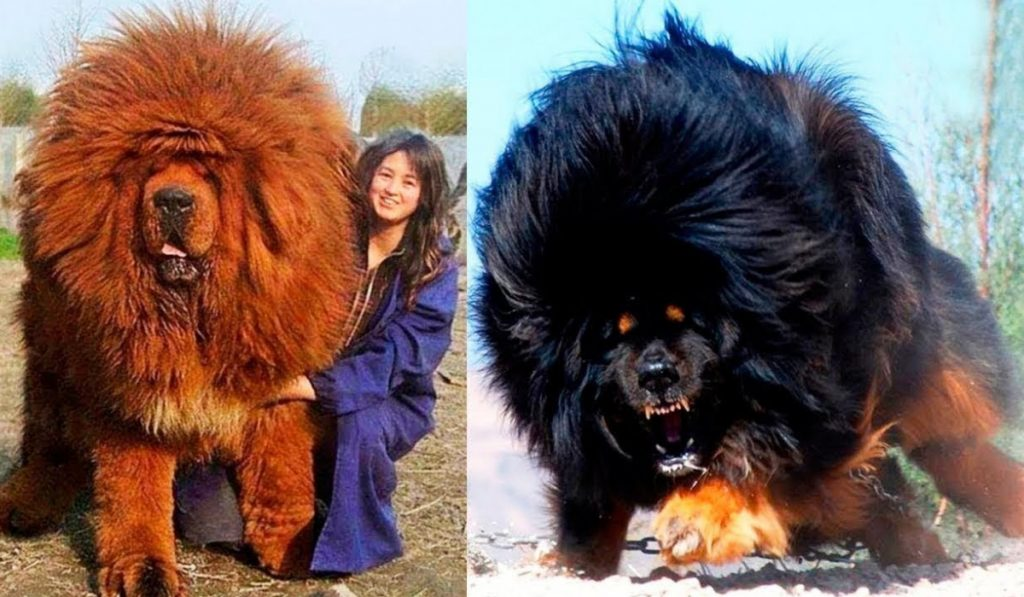 The worlds most expensive dog
